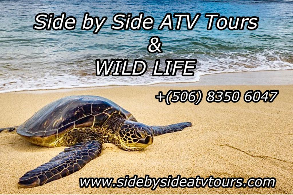 Sidebysideatvtours and wildlife